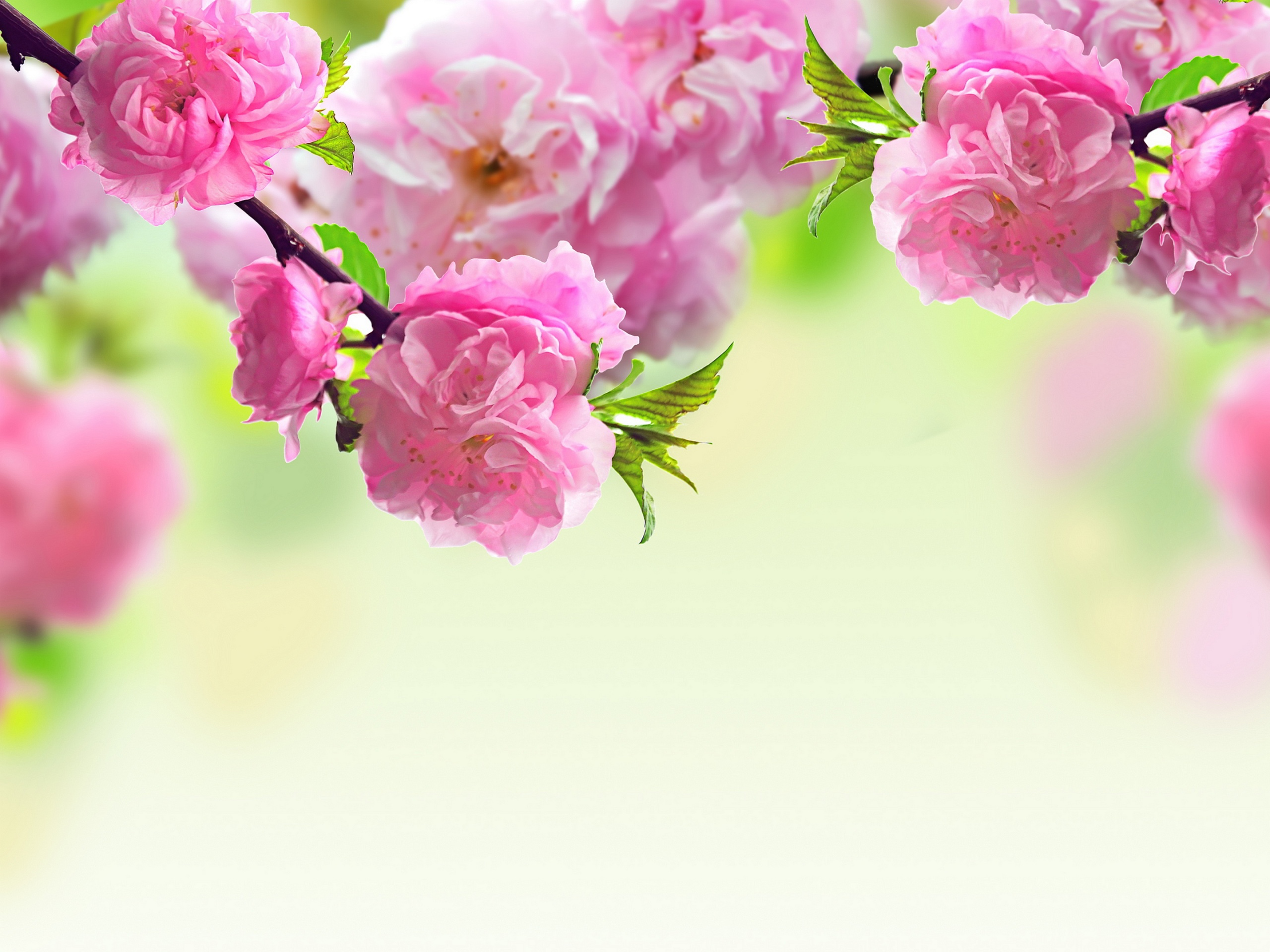 Pink Flowers Mother Day Walpaper 28 Best Western Plus Dover Marina